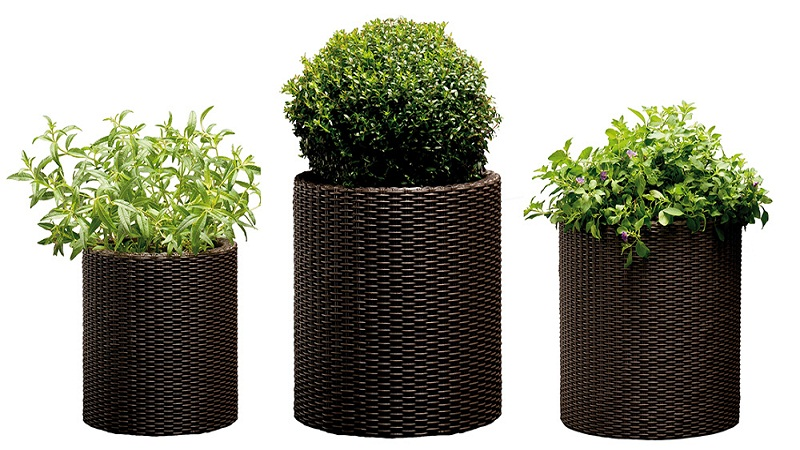 containers for trees